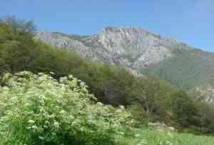 تصویر  پنجم